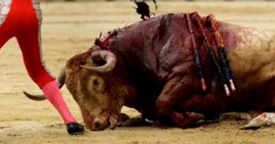 Corrida de toros./ pacma.es