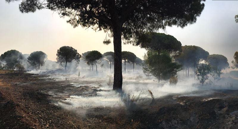 Zona afectada por el incendio./ Facebook Ayuntamiento de Moguer.